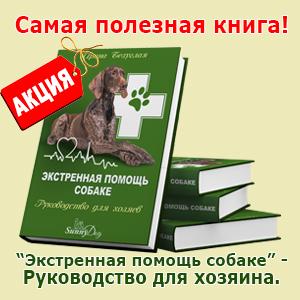 Экстренная помощь собаке