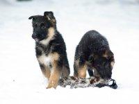 Игрушки для щенка немецкой овчарки
