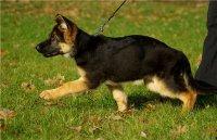 Сколько гулять со щенком ежедневно? Можно ли на улицу непривитому щенку, как часто надо гулять с маленькой собакой - Автор Екатерина Данилова
