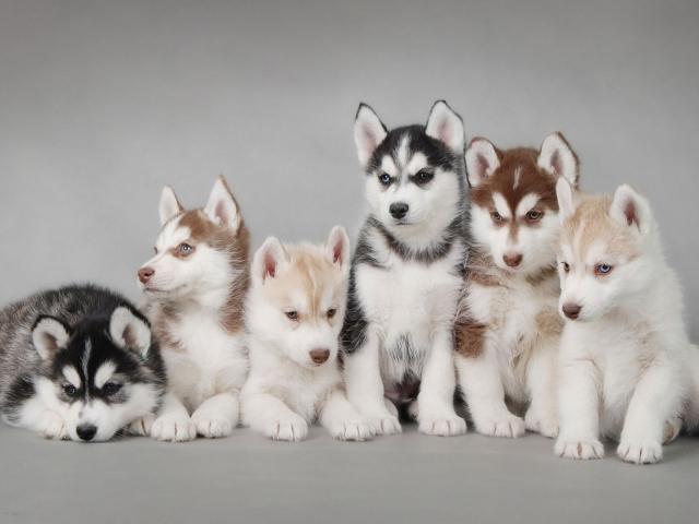 фото все собаки мира