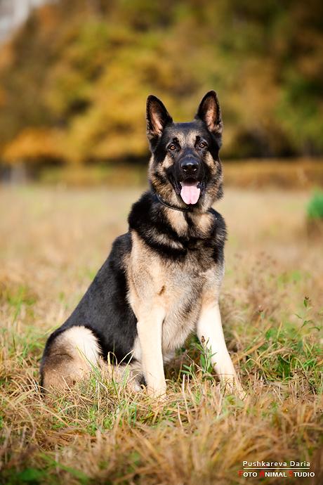 знакомство собак на прогулках