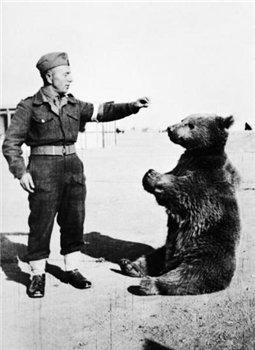 Медведь Войтек