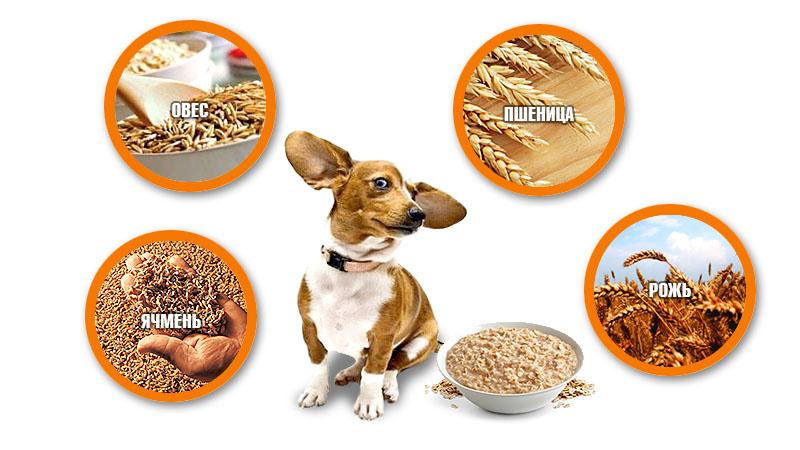 какие крупы можно при пищевой аллергии