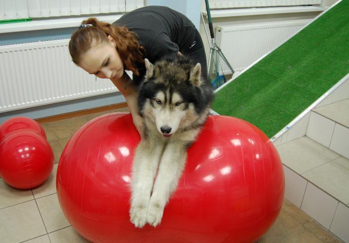 Собака после резекции суставов на двух конечностях восстановление бандаж фиксирующий на плечевой сустав дезо