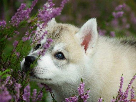 Гомеопатия для домашних животных
