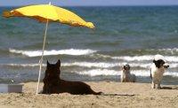 Тепловой удар у животных