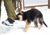 Что делать если собака кусает хозяина