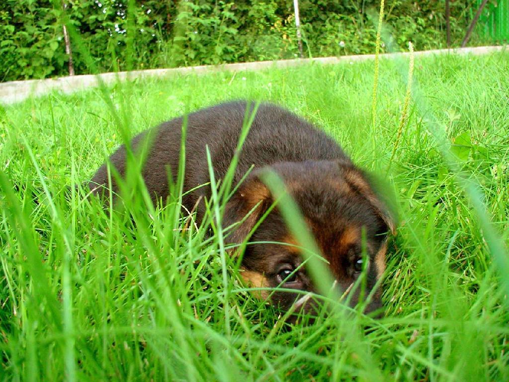 акт приема-передачи щенка образец - фото 8