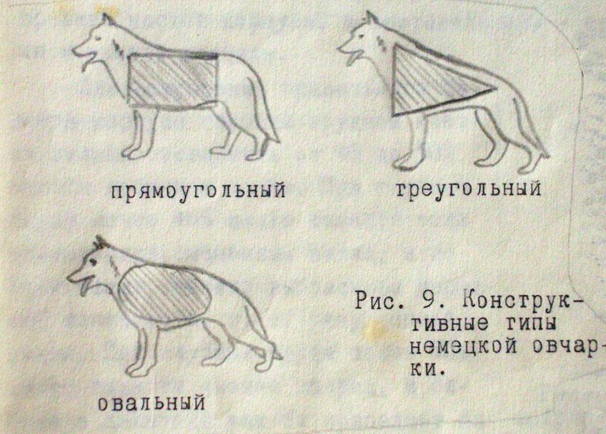 грид 2 картинки