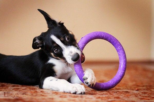 пуллер для собак