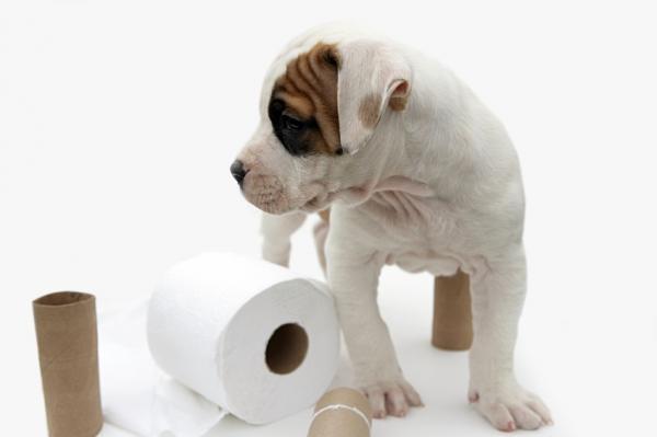 акт приема-передачи щенка образец - фото 3
