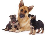 акт приема-передачи щенка образец - фото 11