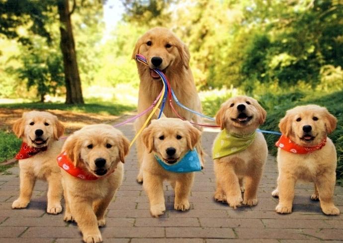 К чему снятся собаки и щенки женщине фото