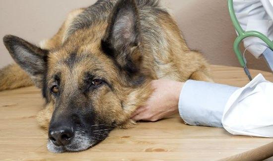 Секреты Неотложной Ветеринарной Помощи Кошки И Собаки