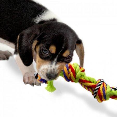 Тренировка длиною в жизнь 1446119051_227_dog-023-600x600