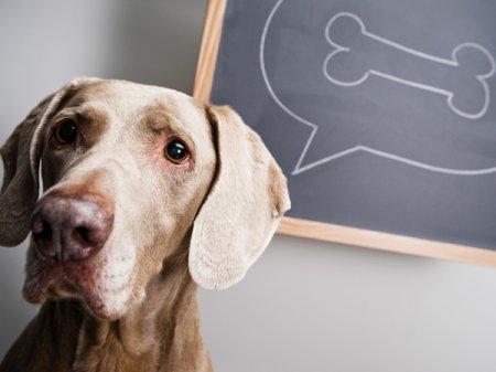 Без социализации хороших собак не бывает 1452699270_1981159_1437684871