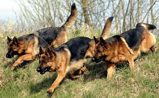Тренировка длиною в жизнь 1459876483_daira-digger-zamp