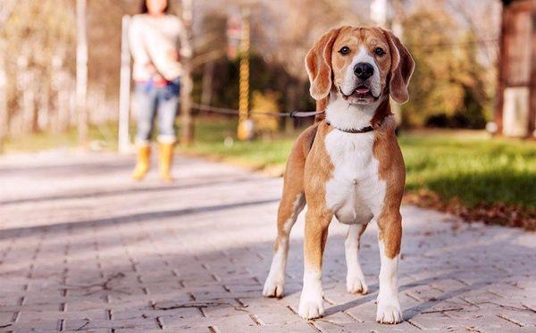 Без социализации хороших собак не бывает 1464099745_ln_8gyyecje