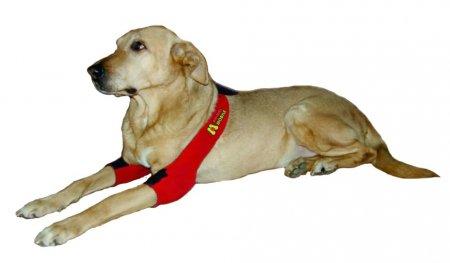 Причины появления мозолей на локтях у собак