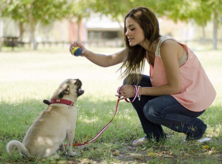 как научить собаку ловить мячик на лету