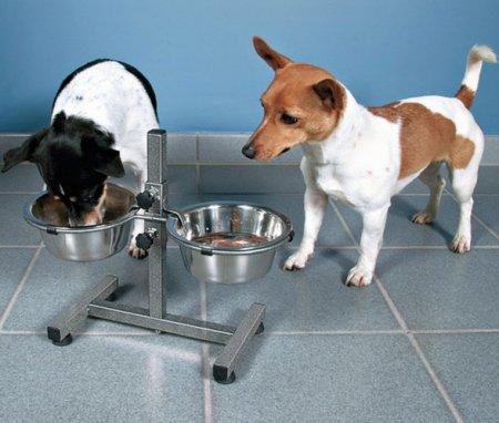 Нужно ли кормить собак с подставки?