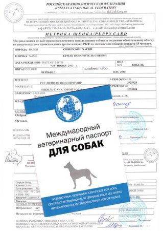 Какие документы должны дать при покупке щенка