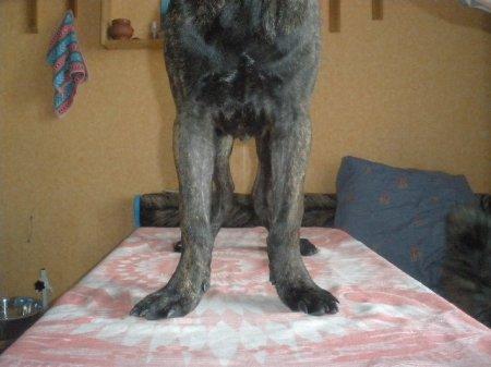Размет и коровина у взрослых собак